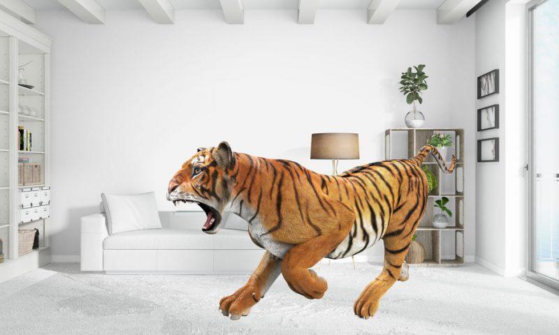 Άγρια ζώα μέσα στο σπίτι σου
