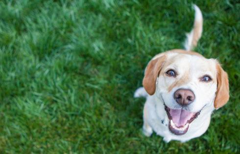 Η Τεχνητή Νοημοσύνη εκπαιδεύει σκύλους