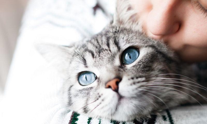 Μάθε εάν η γάτα σου είναι χαρούμενη